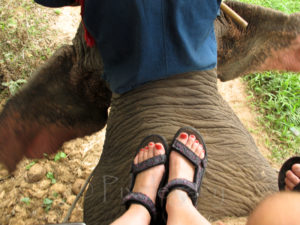 Rebecca's feet on an elephant's back