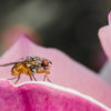 Fly on dogwood