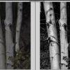 Three_trees